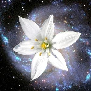 fleur galaxie