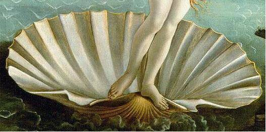 coquille,naissance